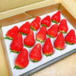 南信州いちご村「おうちでワイワイ!家庭用&加工用イチゴ」